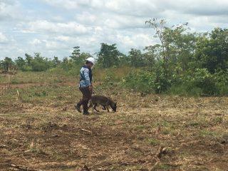 カンボジアで地雷除去の現場を訪れました