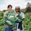 『虹の国』南アフリカの今