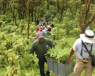 ガラパゴスの森をまもるための植林にご協力ください