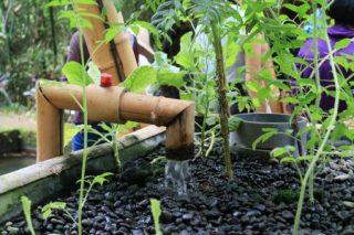 バリのグリーンスクールから、もっとグリーンな世界へ
