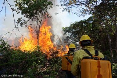<延期>【東京】燃えるアマゾン〜いまブラジルで何が起きているのか